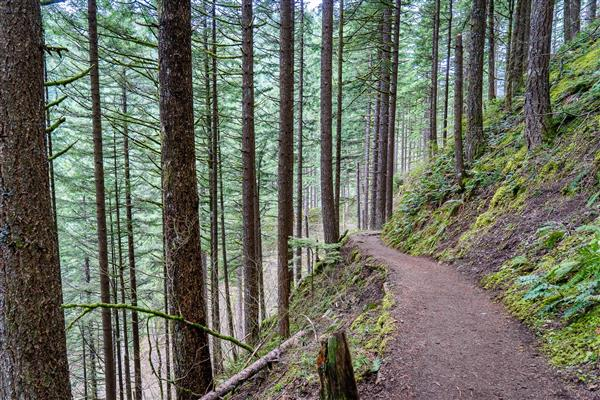Picture of a trail in Portland, Oregon